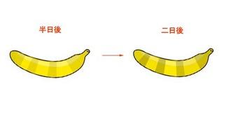 ばなな3.jpg