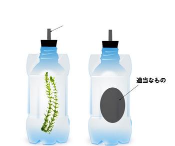 植物 実験2.jpg